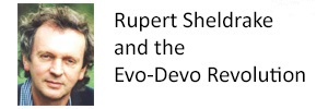Rupert Sheldrake and the Evo-Devo Revolution