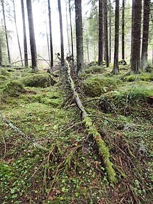 A fallen tree in a forest